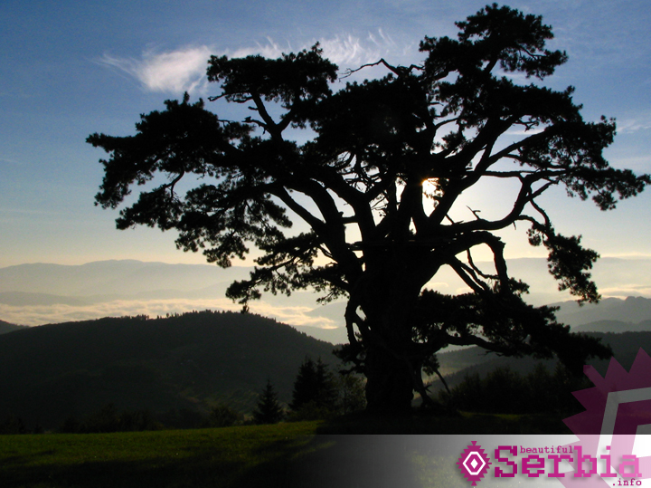 sveti bor Kamena Gora, Sveti bor