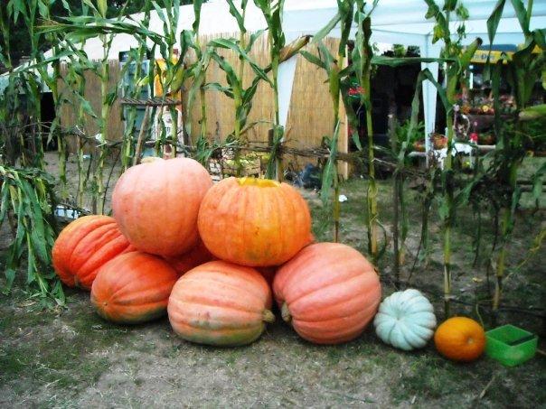izlozba smederevska jesen Tourist event Smederevo's autumn
