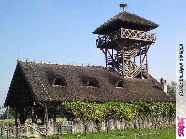zasavica vidikovac Zasavica (i Sremska Mitrovica)