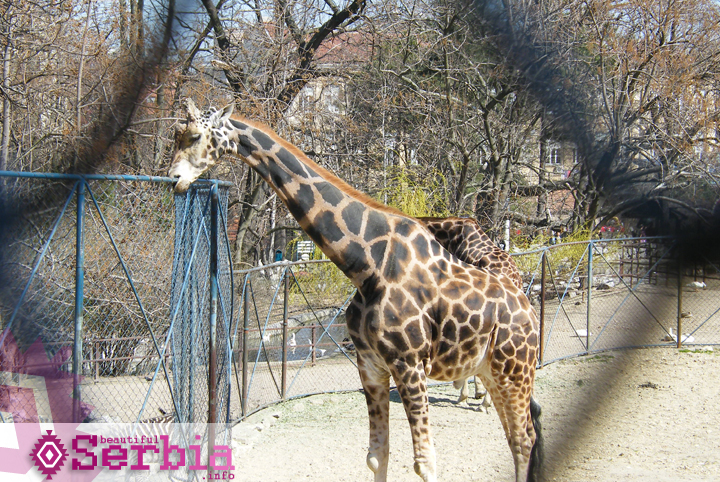 beogradski zoo vrt The city of Belgrade