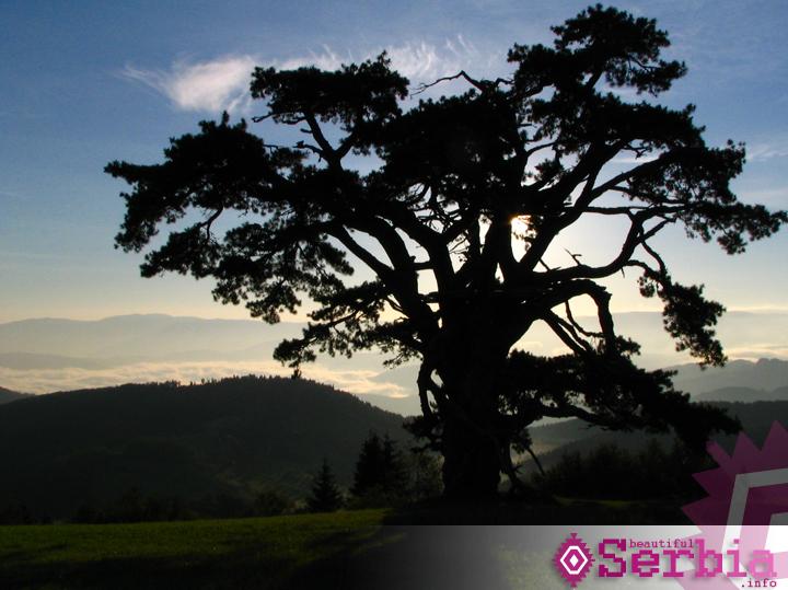 Sveti bor Kamena gora, najlepše selo Srbije