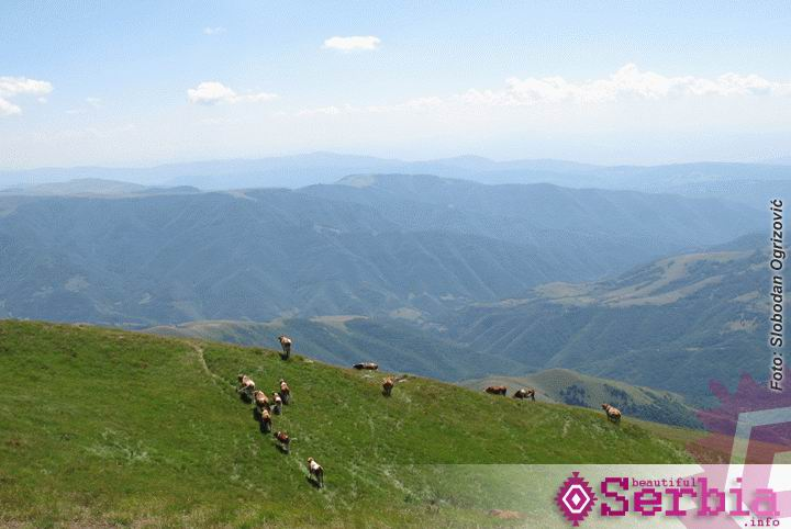 stara planina midzor Istočna Srbija (II deo)